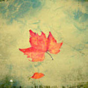 Leaf Upon The Water Print by Bill Cannon