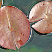 Lily Pads 1 Print by Diana Douglass