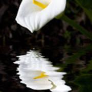 Lily Reflection Print by Avalon Fine Art Photography