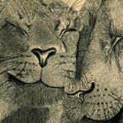 Lions In Love Print by Ramneek Narang