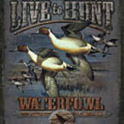 Live To Hunt Pintails Print by JQ Licensing
