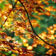 Lost In Leaves Print by Kathy McClure