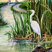 Louisiana Wetlands Print by Elaine Hodges