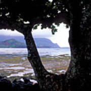 Low Tide And The Tree Print by Kathy Yates