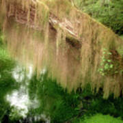 Magical Hall Of Mosses - Hoh Rain Forest Olympic National Park Wa Usa Print by Christine Till