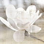 Magnolia Flower Print by Elena Elisseeva