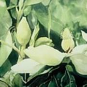 Magnolium Opus Print by Elizabeth Carr