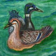 Mallard Ducks Print by Anna Folkartanna Maciejewska-Dyba