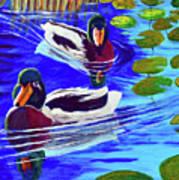 Mallards In The Pads Print by Bob Crawford