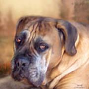 Mastiff Portrait Print by Carol Cavalaris