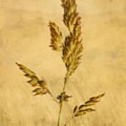 Meadow Grass Print by John Edwards