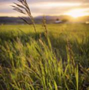 Meadow Light Print by Chad Dutson