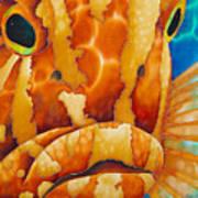 Nassau Grouper  Print by Daniel Jean-Baptiste