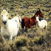 Nevada Wild Horses Print by Marty Koch