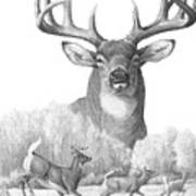 North American Nobility Whitetail Deer Print By Laurie