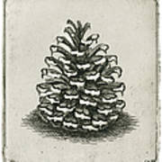 One Pinecone Print by Charles Harden