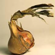 Onion Print by Bernard Jaubert