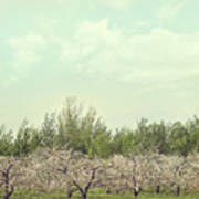 Orchard Of Apple Blossoming Tees Print by Sandra Cunningham