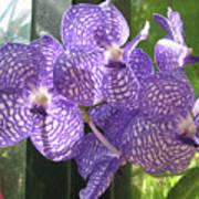 Orchid Print by Darren Stein