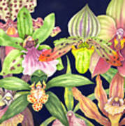 Orchids  Print by Lucy Arnold
