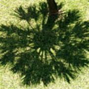 Palm Shadow Print by Richard Mansfield