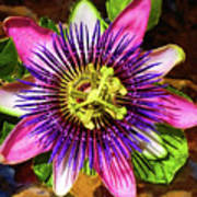 Passion Flower Print by Mariola Bitner