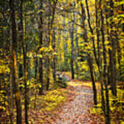 Path In Fall Forest Print by Elena Elisseeva