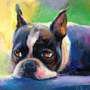 Pensive Boston Terrier Dog Painting Print by Svetlana Novikova