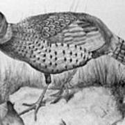 Pheasant In The Wild Print by Roy Anthony Kaelin