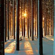 Pine Forest Print by www.WM ArtPhoto.se