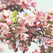 Pink Apple Blossoms Print by Sandra Cunningham