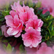 Pink Azaleas Print by Sandy Keeton