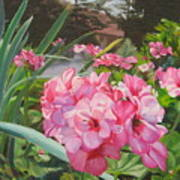 Pink Geraniums Print by Lea Novak