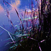 Pond Reeds At Sunset Print by Joanne Smoley