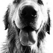 Portrait Of A Happy Dog Print by Osvaldo Hamer