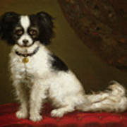 Portrait Of A Spaniel Print by Anonymous
