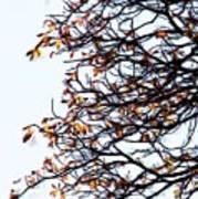 Praha Tangled Tree Print by Shawn Wallwork
