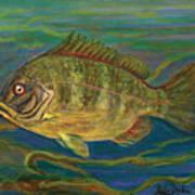 Predatory Fish Print by Anna Folkartanna Maciejewska-Dyba