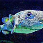 Puffer Fish Print by Jane Schnetlage