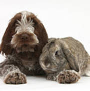 Puppy And Rabbt Print by Mark Taylor