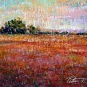 Quiet Over The Field Print by Peter R Davidson
