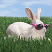 Rabbit With Sunglasses Print by George Caswell