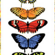 Rainbow Butterflies Print by Lucy Arnold