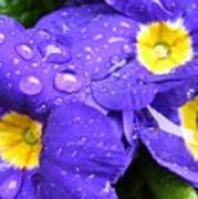 Raindrops On Blue Flowers Print by Carol Groenen