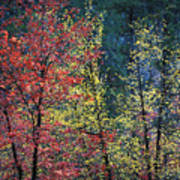 Red And Yellow Leaves Abstract Horizontal Number 1 Print by Heather Kirk