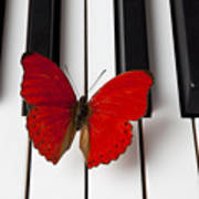 Red Butterfly On Piano Keys Print by Garry Gay