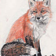Red Fox In Snow Print by Marqueta Graham