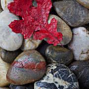 Red Leaf Wet Stones Print by Garry Gay