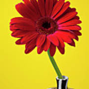 Red Mum Against Yellow Background Print by Garry Gay
