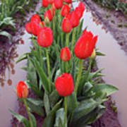 Red Tulip Row Print by Kami McKeon